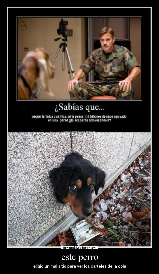 Me Dicen Mi Perro Muerde Las Manos O No Obedece Es Para