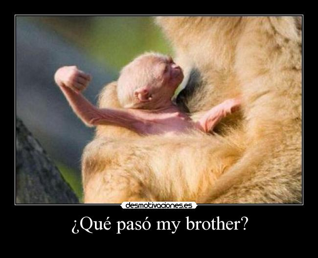 ¿Qué pasó my brother? -