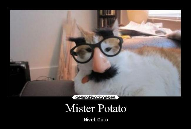 Mister Potato - Nivel: Gato