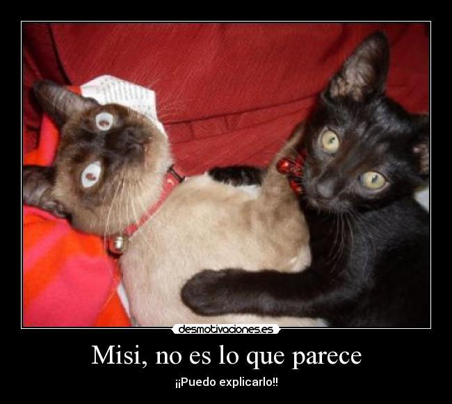 carteles gatos amor amante desmotivaciones