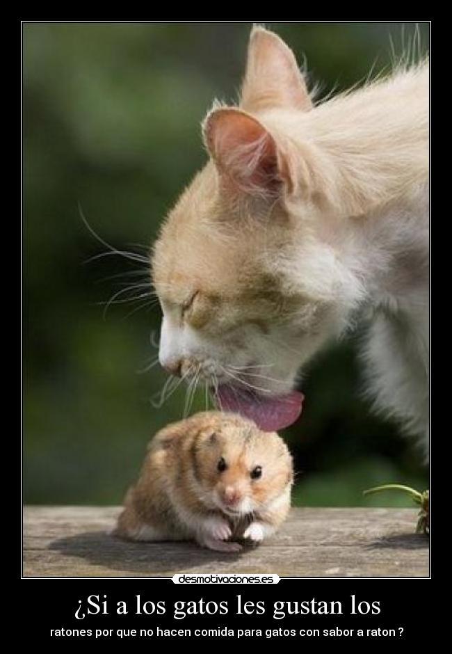 Gatos y ratones memes - Comida para ratones ...