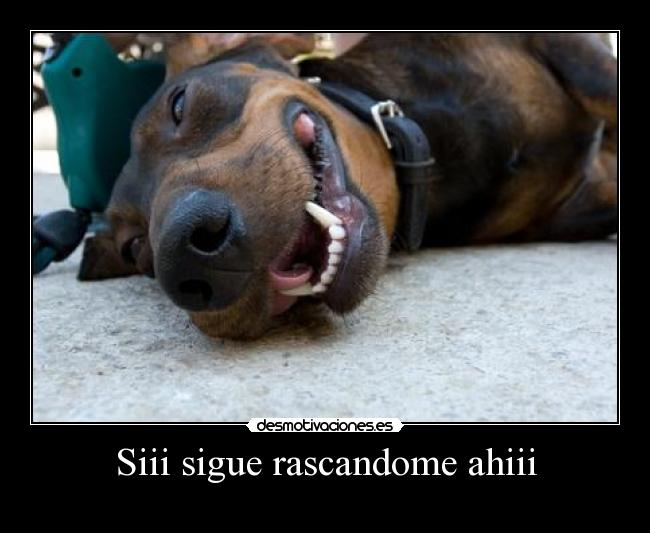 Siii sigue rascandome ahiii -