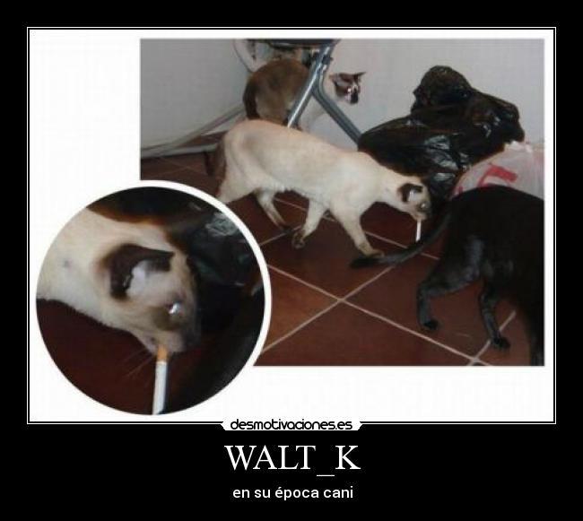 carteles walt_k epoca cani cigarro gatosfumando tabaco acv desmotivaciones