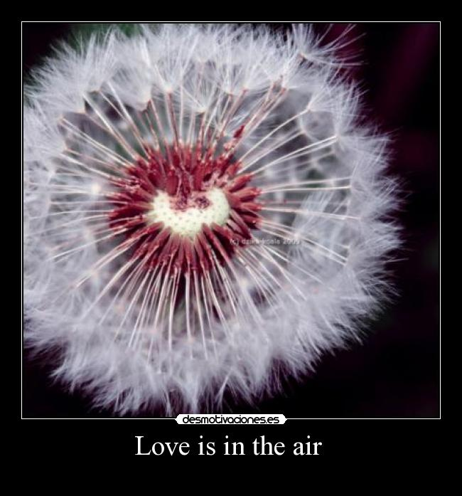 Love is in the air  -
