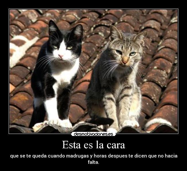 Memes de amor   Memes Para Facebook en Español