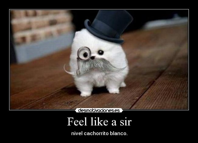 Feel like a sir - nivel cachorrito blanco.