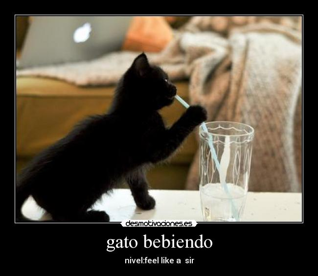 gato bebiendo - nivel:feel like a  sir