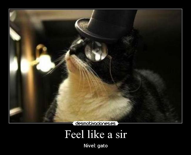 Feel like a sir - Nivel: gato