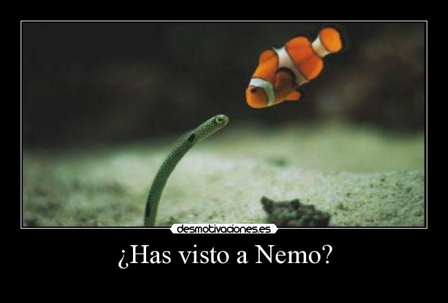 ¿Has visto a Nemo? -