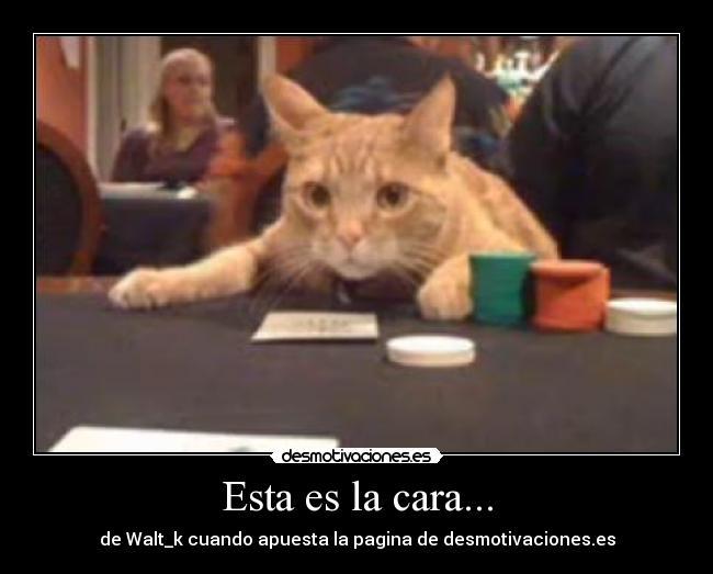 Funny gambling slogans casino fun gaming madison