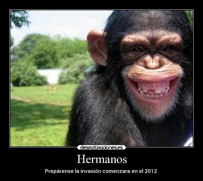 Imagenes Chistosas Con Frases De Monos Hermanos Imagui