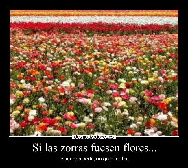 carteles flores jardin zorras desmotivaciones