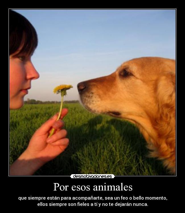 Por esos animales desmotivaciones - Animales con personas apareandose ...