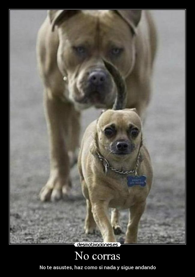 Породы собак  Википедия