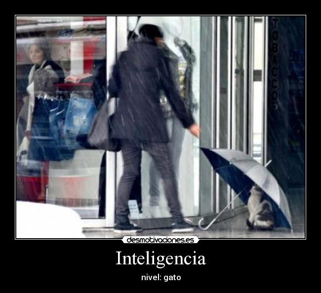Inteligencia - nivel: gato