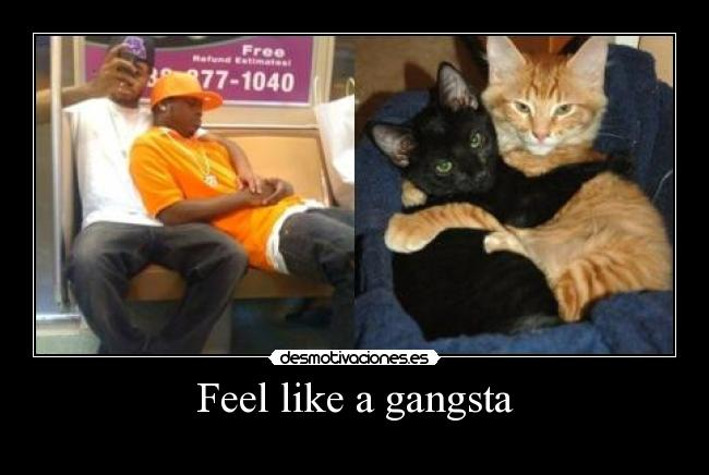 Feel like a gangsta -