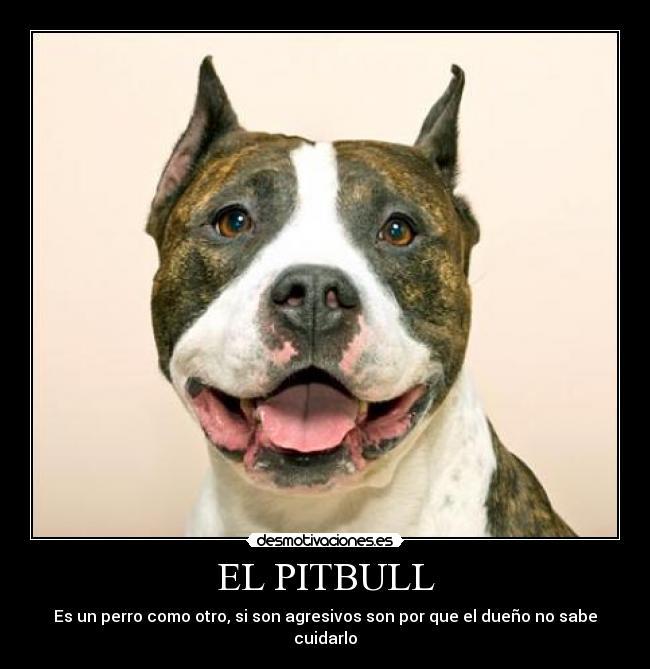 Imagenes de perro pitbull con frases - Imagui
