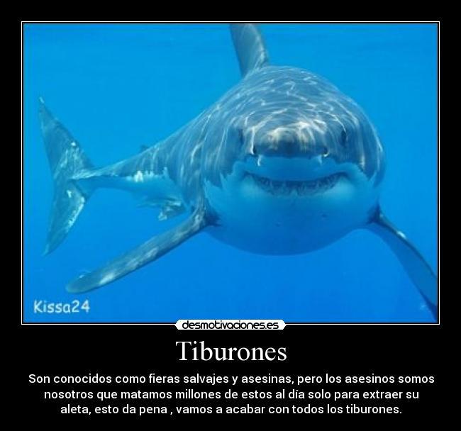http://img.desmotivaciones.es/201106/tiburones.jpg