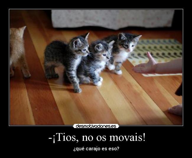 carteles gatos asustados mano humor desmotivaciones