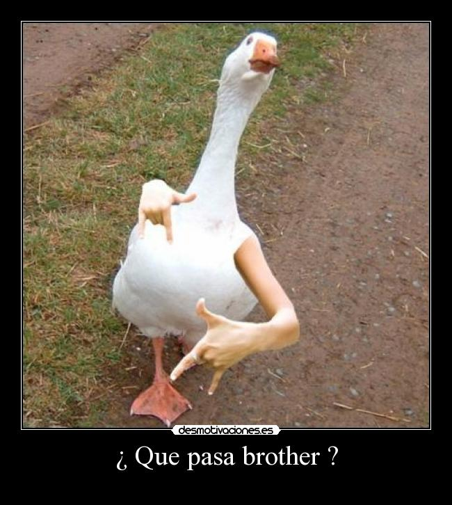 ¿ Que pasa brother ? -