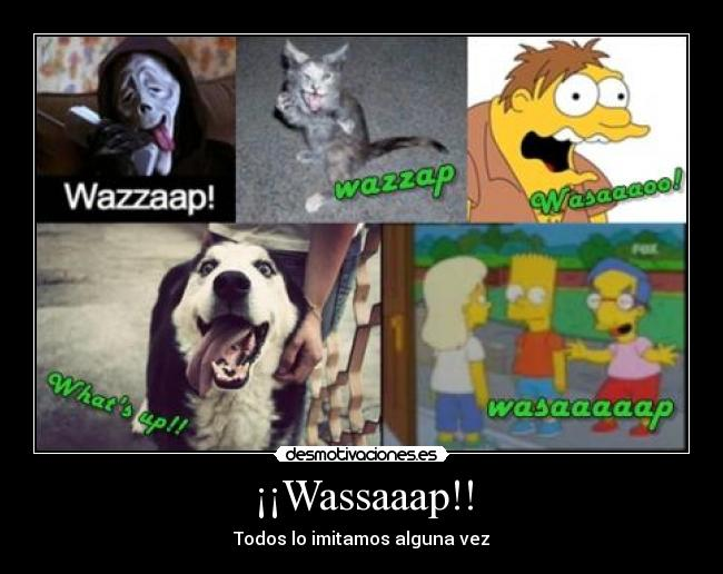 carteles whats up wazzaap wassa simpson gato perro scream desmotivaciones