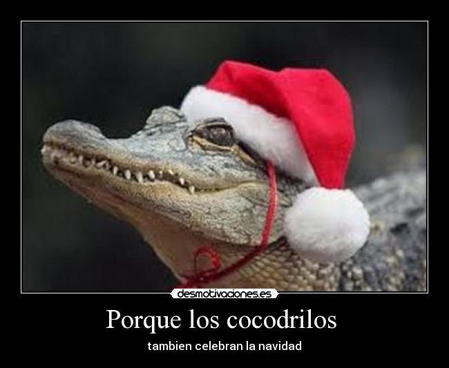 ¡Tercera navidad en S2, WOHOO! 0k01525_navidadgraciosa5