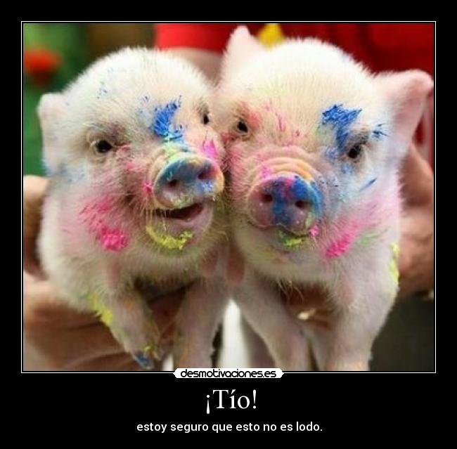 Fotos de cerdos chistosos - Imagui
