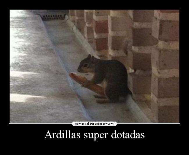 Ardillas super dotadas -