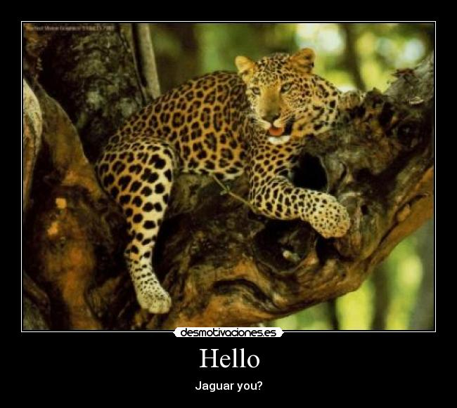 Hello - Jaguar you?
