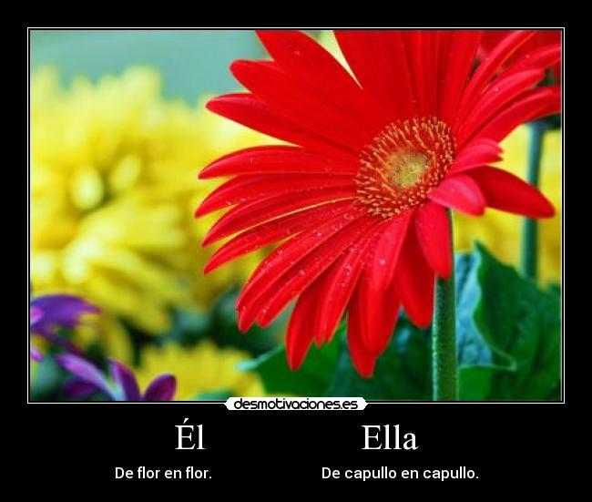 El-Ella