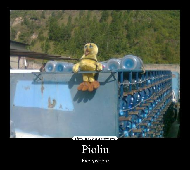 Piolin - Everywhere