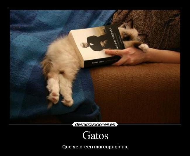 Gatos - Que se creen marcapaginas.