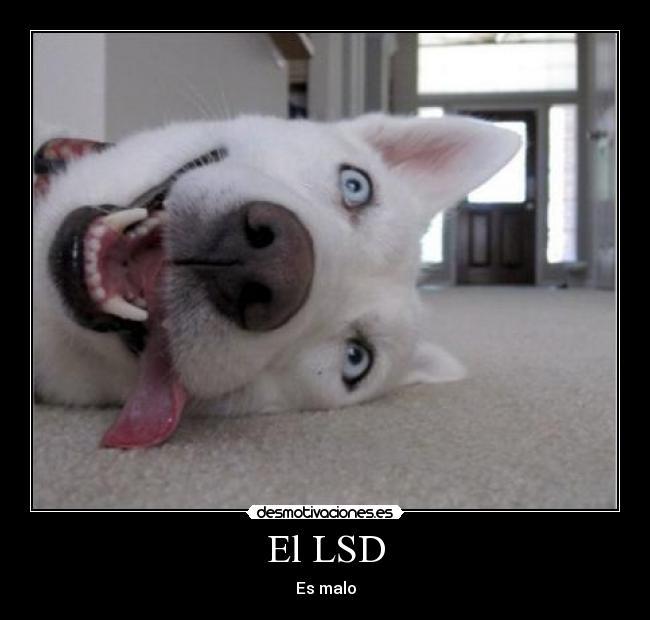 el lsd: