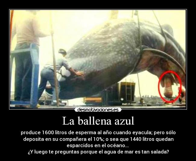 Longitud de un pene de ballena azul