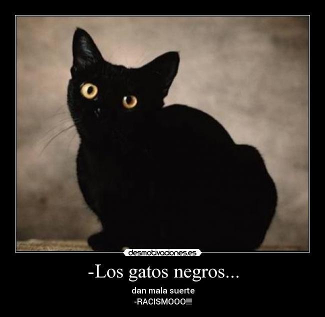 Los gatos negros desmotivaciones - Dan mala suerte las hortensias ...