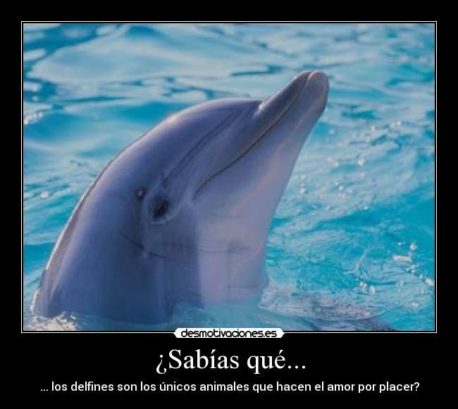 Delfines con frases d amor - Imagui