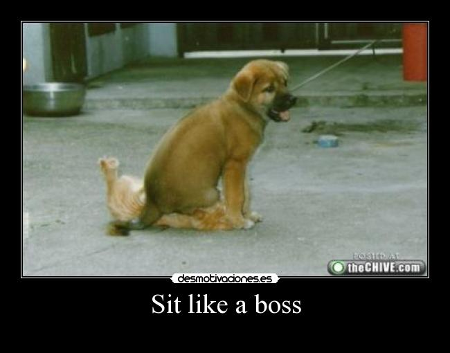 Sit like a boss -