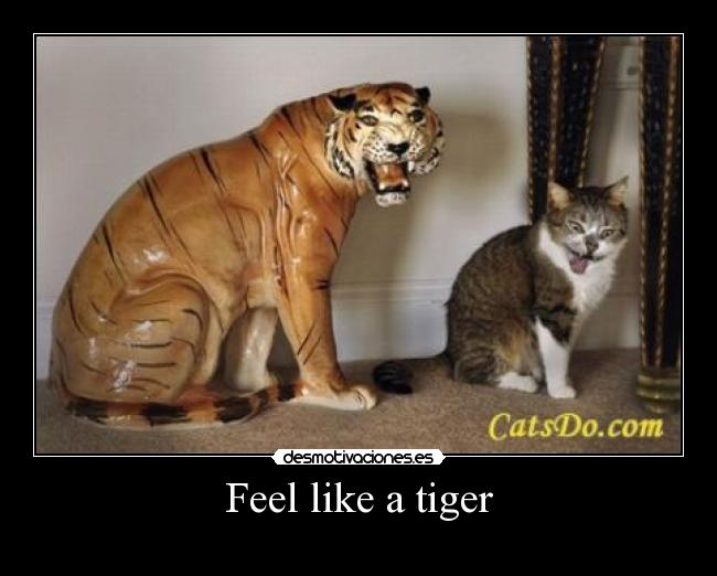 Feel like a tiger -