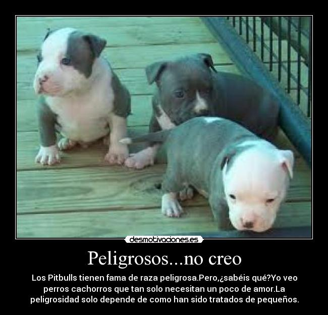 Im In Love With My Best Friend Quotes imagenes de perros pit...