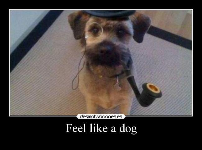 Feel like a dog -