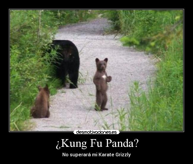 carteles oso karateka desmotivaciones