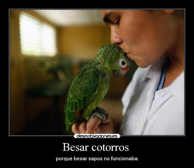 imagenes de pericos, loros y cotorros (7 aves de colores
