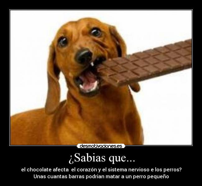 Sabias que desmotivaciones - Es malo banar mucho a los perros ...