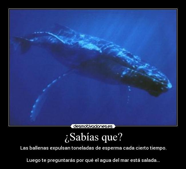 La vida de las ballenas de esperma