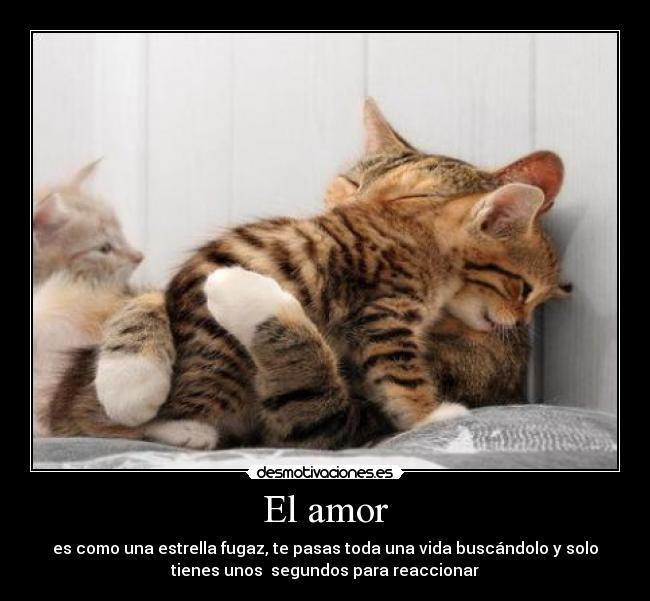 Amor gatito - Imagui