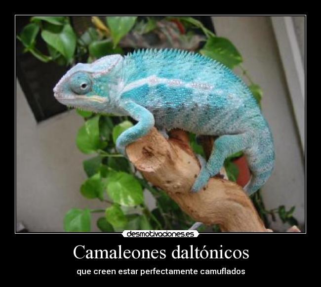 Camaleones-daltonicos