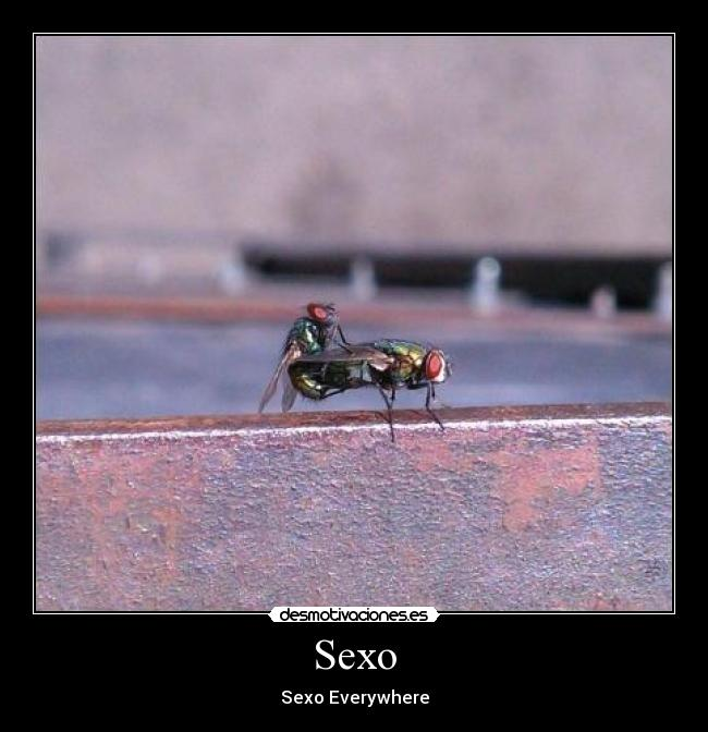 Sexo - Sexo Everywhere