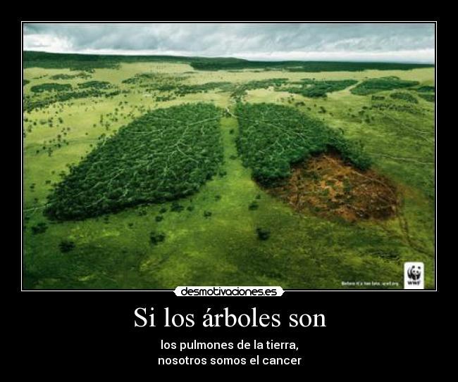 Mundo animal deforestaci n for Medio en el que habitan los arboles