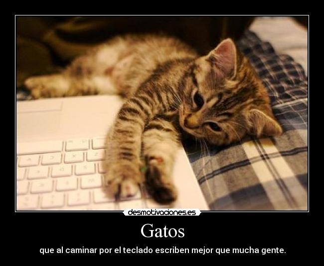carteles gatos gato desmotivaciones