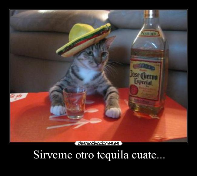 Sirveme otro tequila cuate... -